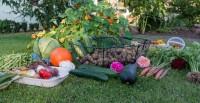 Gemüse anbauen – Eine Anleitung