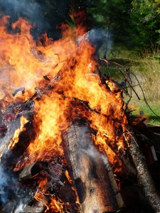 baumstumpf verbrennen