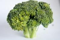 Brokkoli pflanzen im eigenen Garten