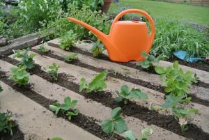 erdbeeren nutzgarten