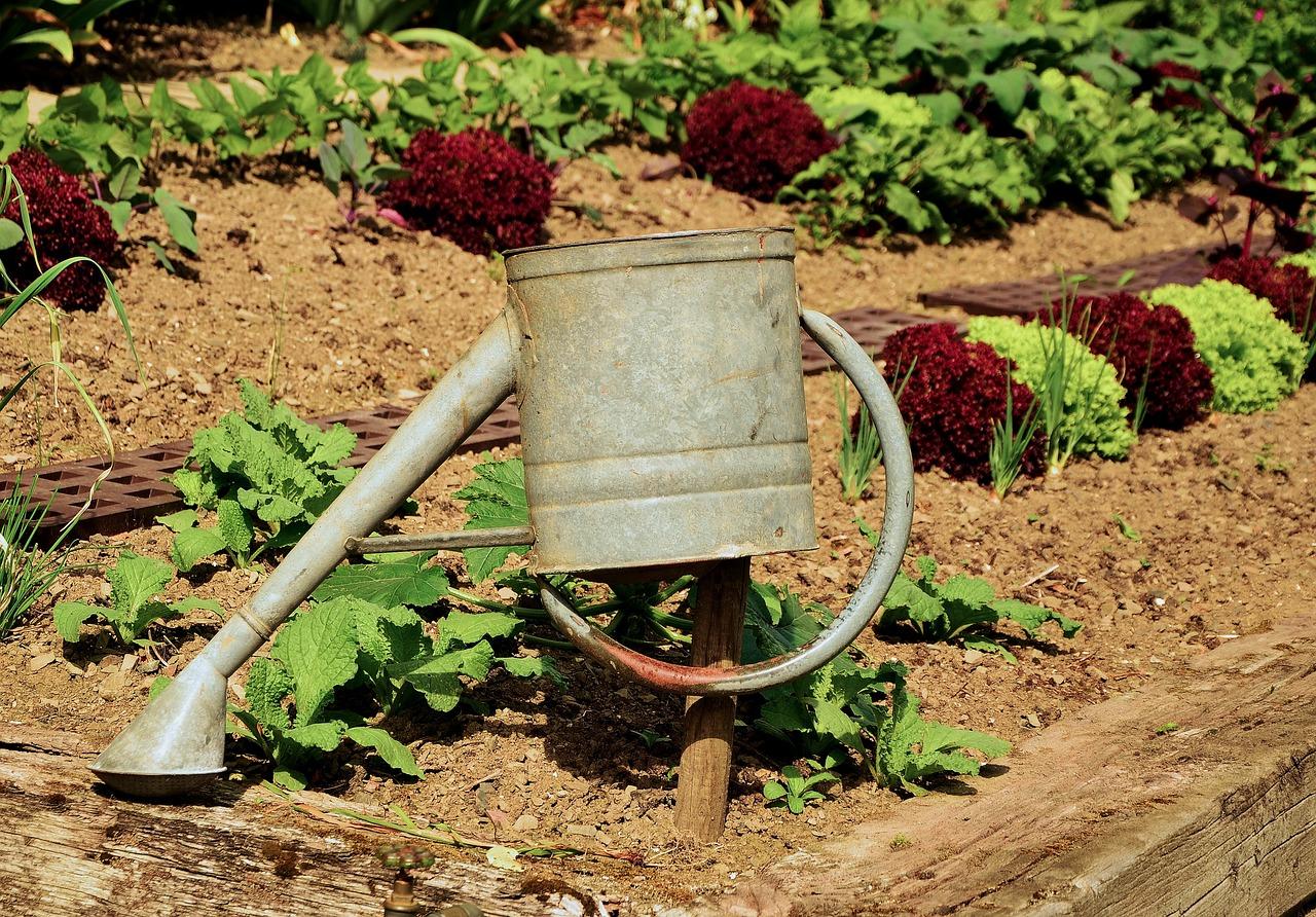 Gemüsebeet anlegen – Eine Anleitung
