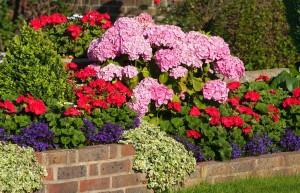 hortensien anpflanzen