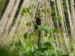 kletterhilfe für pflanzen