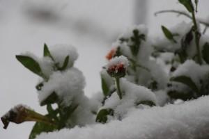 pflanzen februar
