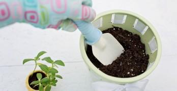 Pflanzen umtopfen Anleitung