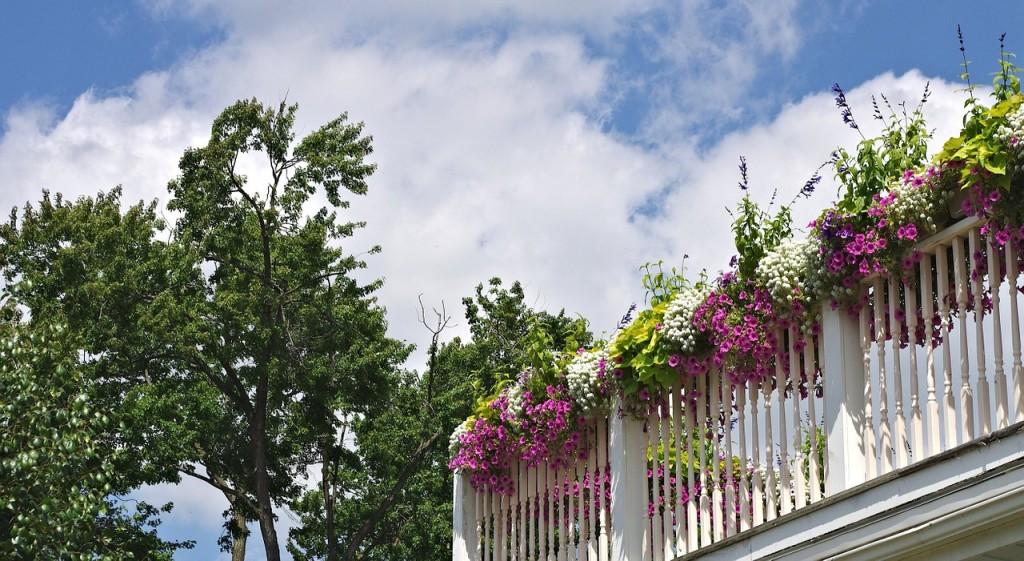 pflegeleichte balkonpflanzen - infos und tipps - garten mix, Garten ideen