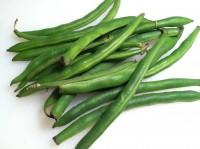 Bohnen pflanzen und gute Erträge erzielen