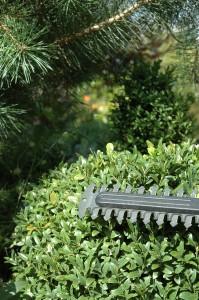 buchsbaum schneiden eigentlich ganz einfach garten mix. Black Bedroom Furniture Sets. Home Design Ideas