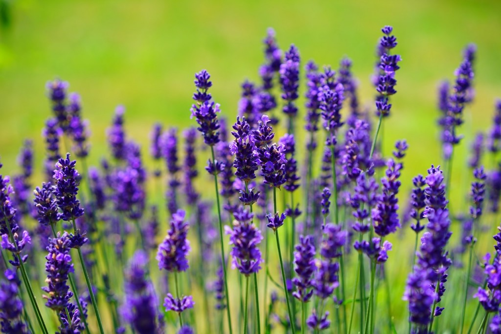 Garten Gestaltung Ideen Kies Gartenweg Baum Lavendel