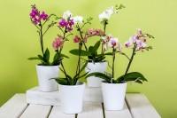 Orchideen umtopfen – was gibt es zu beachten?