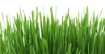 Rasen düngen im Frühjahr – Eine Anleitung