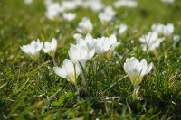 Rasenpflege im Frühjahr – so geht's