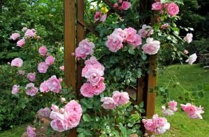 rosen busch