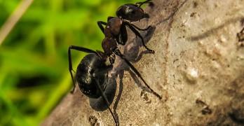 Was hilft gegen Ameisen – die besten Mittel