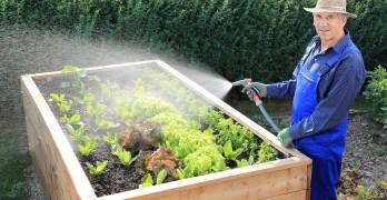 Hochbeet bepflanzen Vorgehensweise