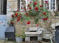 rosen vermehren eine anleitung garten mix. Black Bedroom Furniture Sets. Home Design Ideas