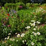 Naturgarten anlegen – so geht's