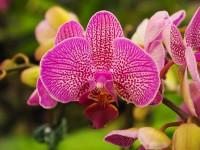 Orchideen vermehren – nicht ganz einfach!