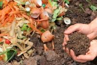 Was darf auf den Kompost, was nicht?
