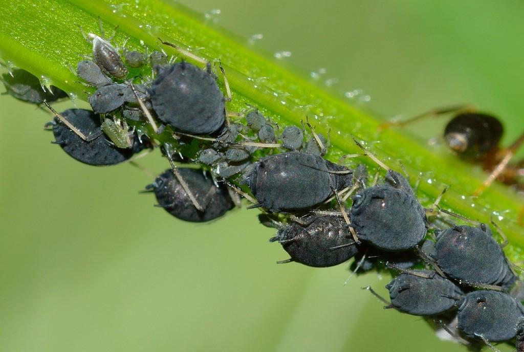 Hausmittel Gegen Blattläuse - Garten Mix Tipps Pflanzenpflege Hausmittel