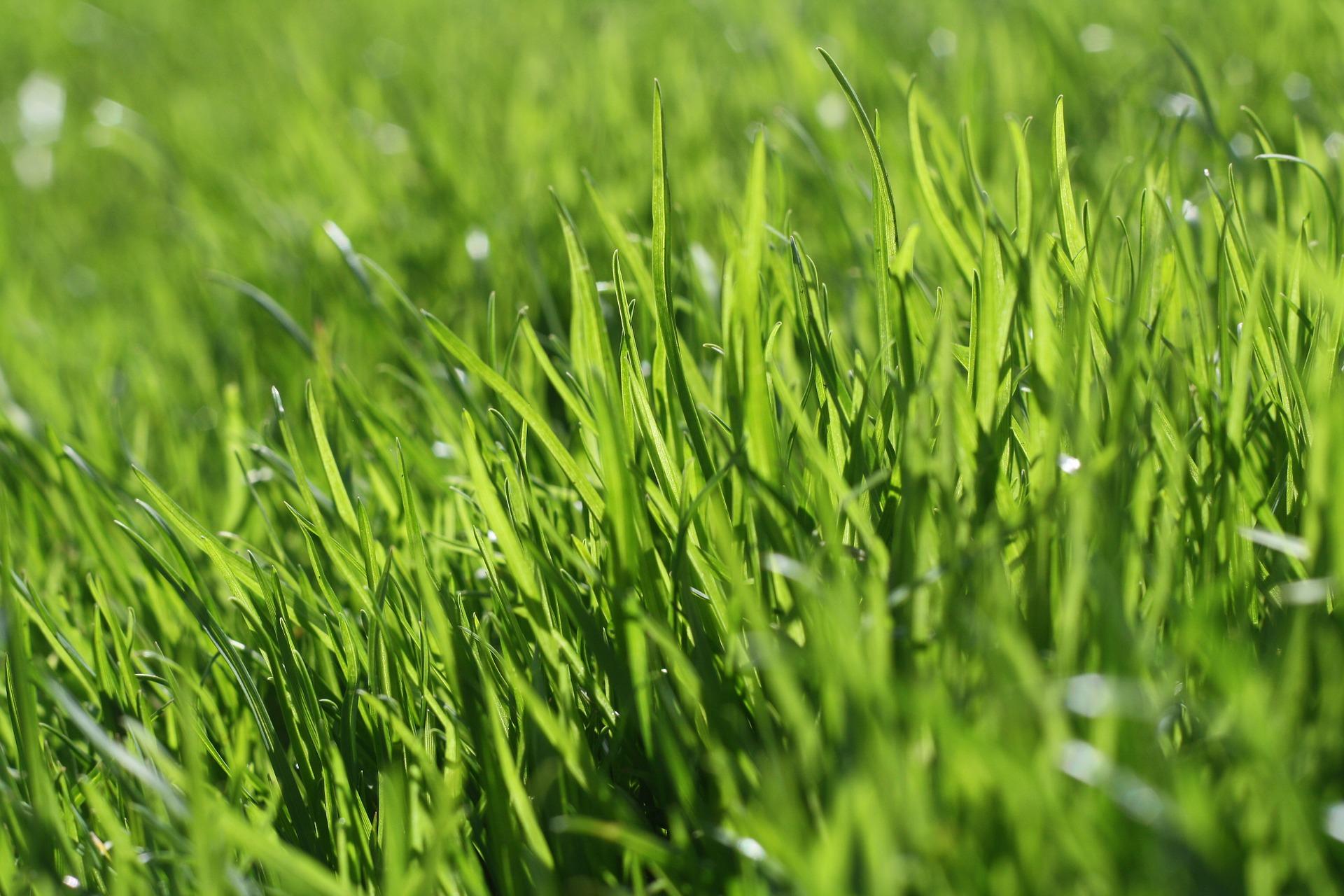 Rasen neu anlegen - Tipps und Tricks