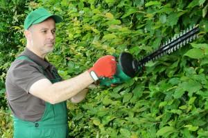 Turbo Buchenhecke schneiden - aber wie? - Garten Mix IH64