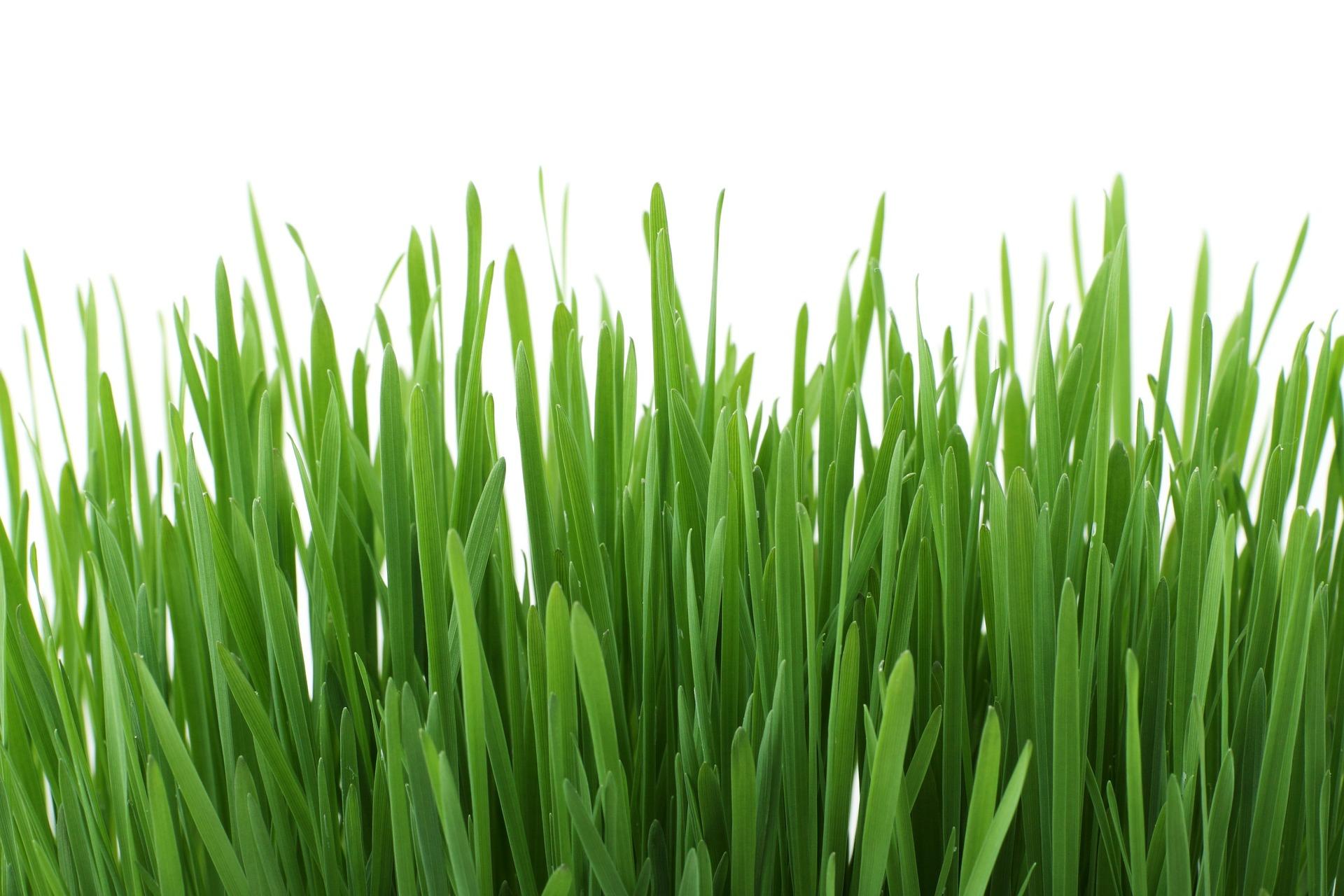 Rasen düngen im Frühjahr - Eine Anleitung