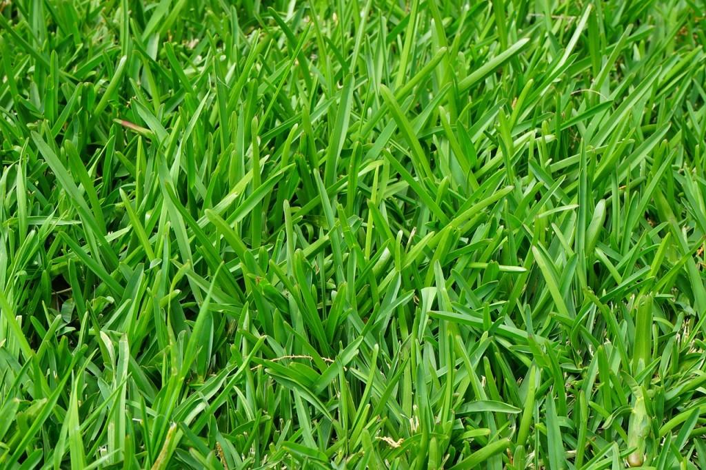Fabelhaft Rasen säen - so gelingt es - Garten Mix @JS_63